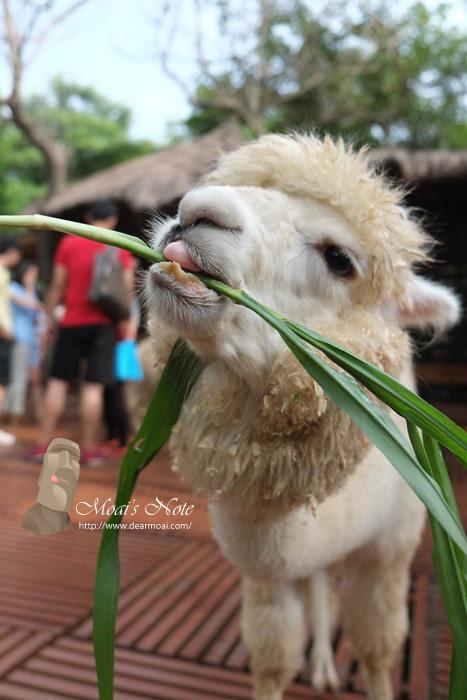【高雄市小港區】淨園機場咖啡休閒農場~就是為了草尼馬而來