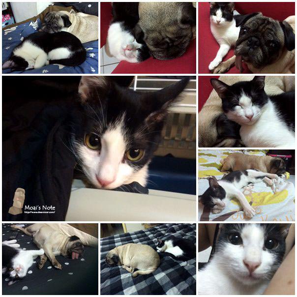 【生活紀錄】貓咪來了~50歲胎胎與10歲小朋友也能相處得很好!