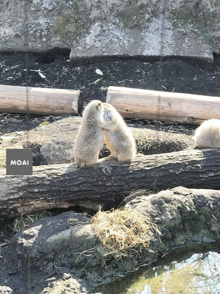 【2017東京女子輕旅行】上野動物園初探險~北極熊本人好大好可愛好想帶回家