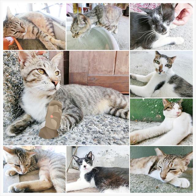 【新北市瑞芳區】侯硐(猴硐)貓村~透中島的熱呼呼隨拍