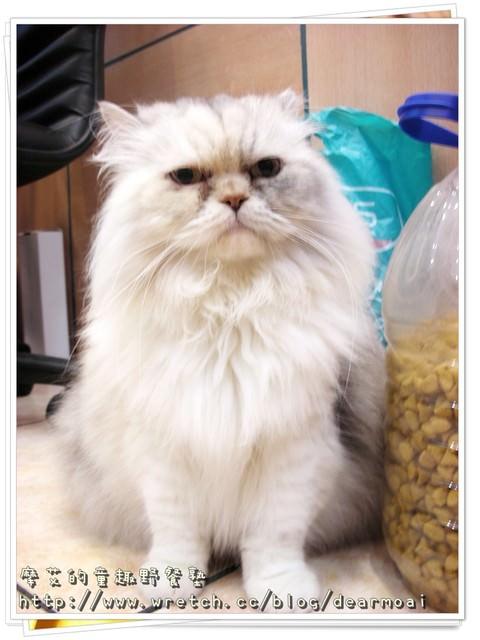 【北市木柵】三三活力早餐 + 可愛小貓咪